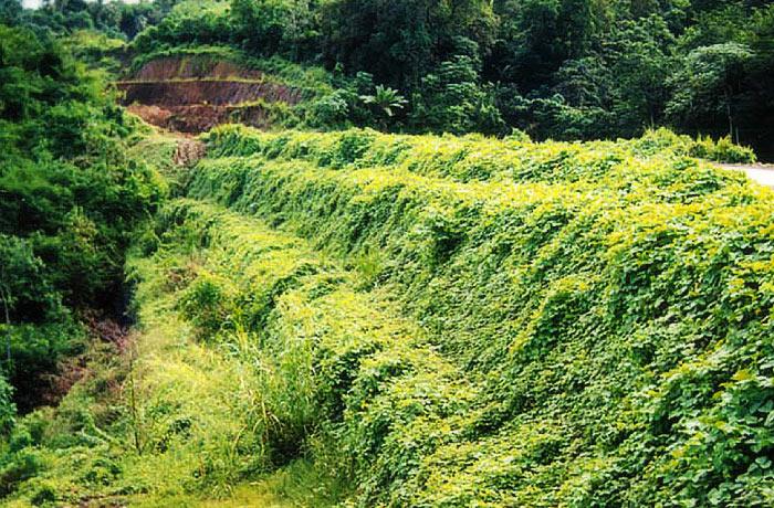 Зеленый Террамеш